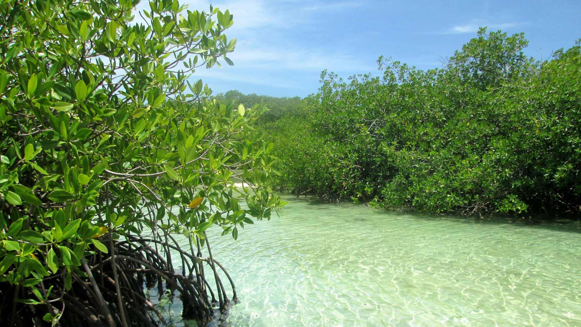 Según el Ministerio para Ecosocialismo y Aguas, el objetivo es sensibilizar y concienciar sobre su importancia en el ecosistema