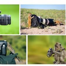 Los fotógrafos más adorables que verás
