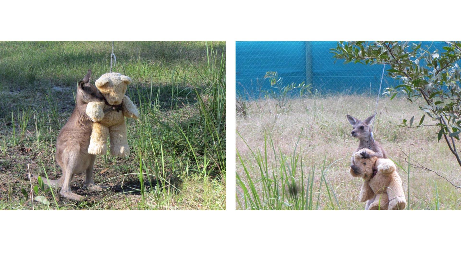 El osito se ha convertido en el mejor amigo del animal que quedó huérfano