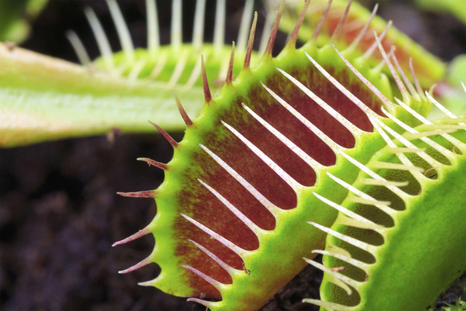 Aunque parezca extraño, la naturaleza es capaz de mostrar organismos vivos que resultan ser tan peligrosos como bellos