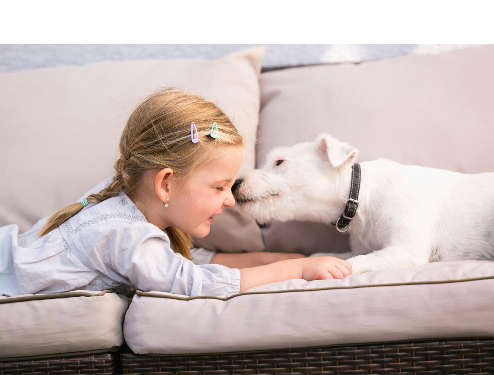 Si quieres tener un amigo invaluable y aumentar tus beneficios emocionales, ¿qué esperas para tener un animalito en casa?