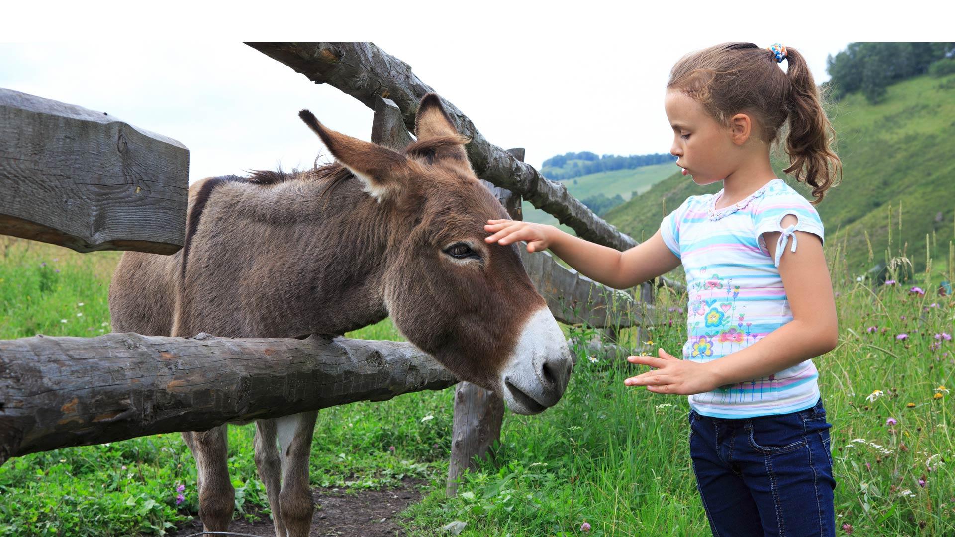 """Un veterinario plantea la """"asnoterapia"""", un tratamiento para niños y adolescentes con problemas de socialización"""