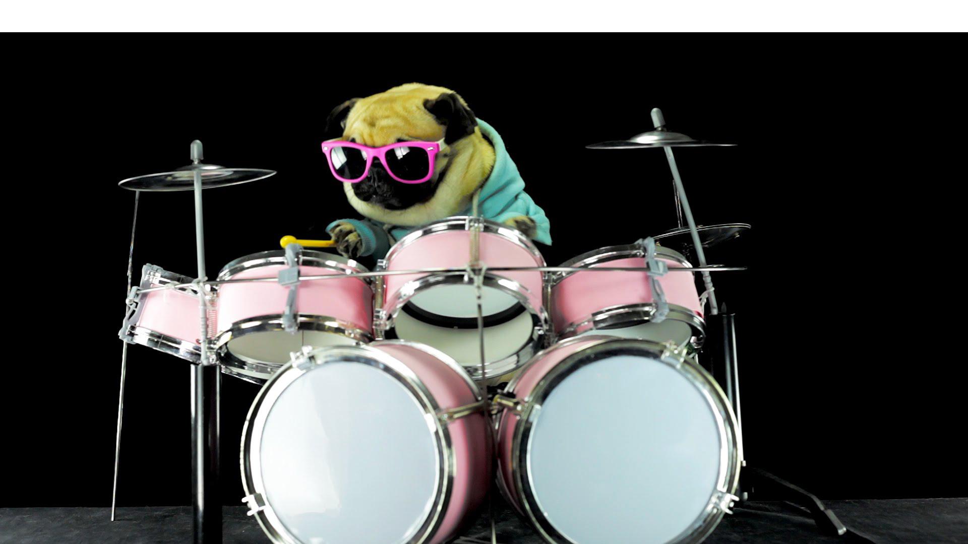"""Este perro toca """"Enter Sandman"""" mejor que el baterista de Metallica. Además, no se puede negar que tiene mejor estilo"""