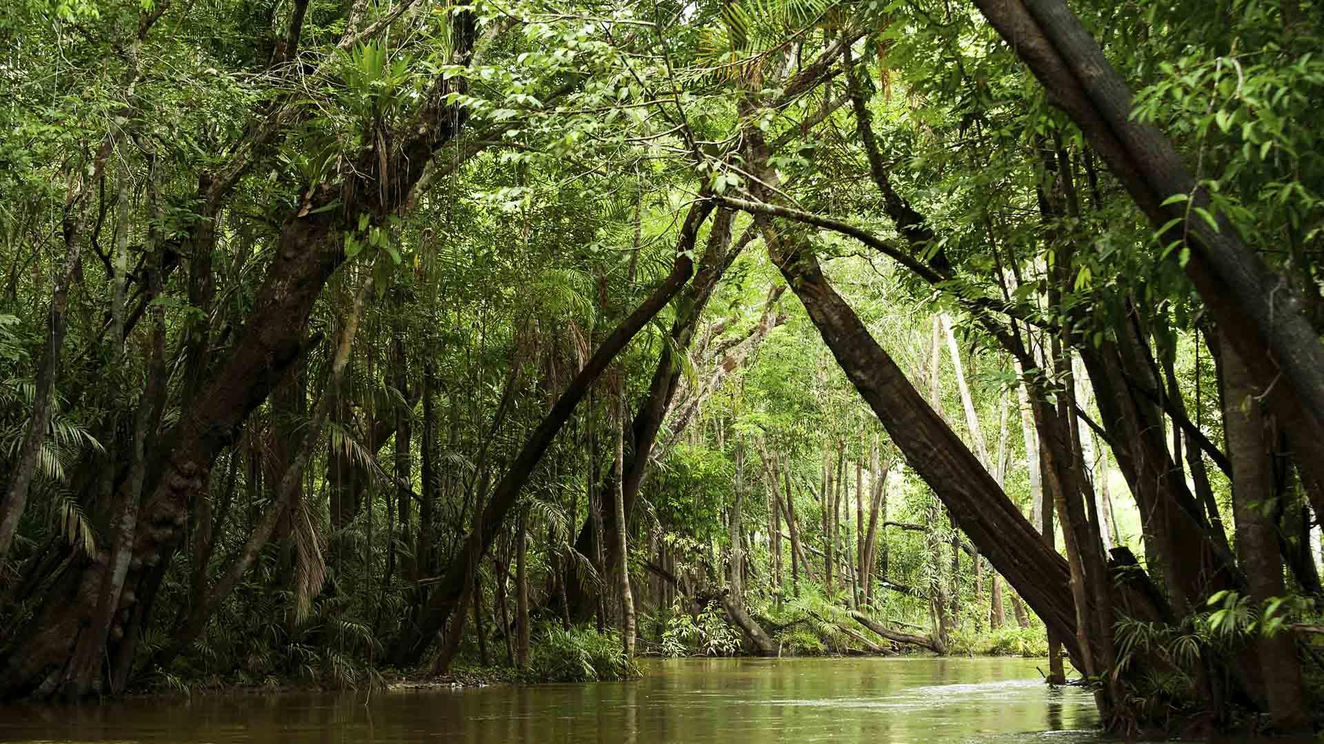 El bosque tropical más extenso del mundo recibirá proyectos preventivos sobre el cambio climático