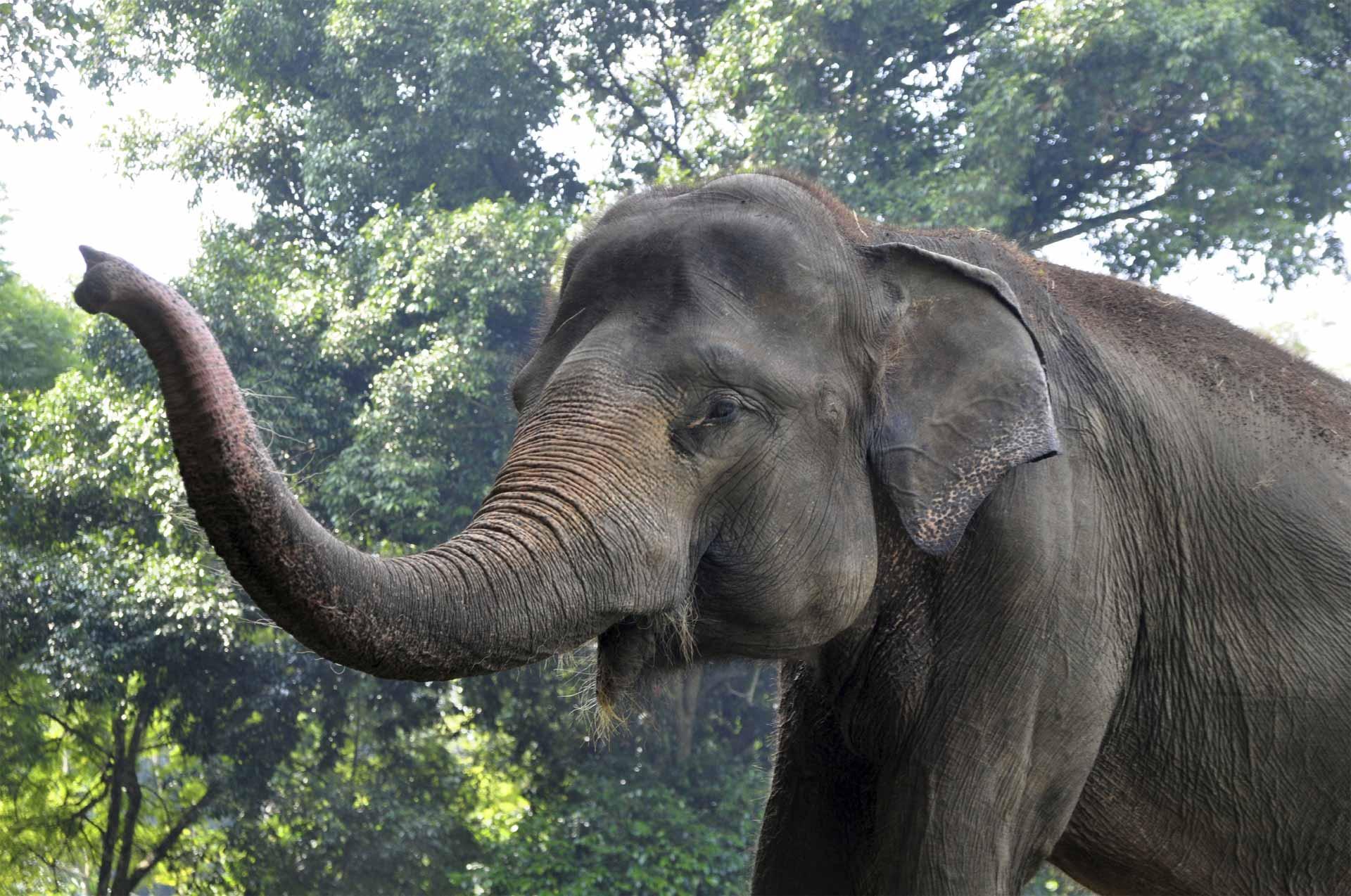 Los elefantes patrullan junto con sus compañeros humanos las zonas del bosque nacional, para asegurar que incendios no reaparezcan