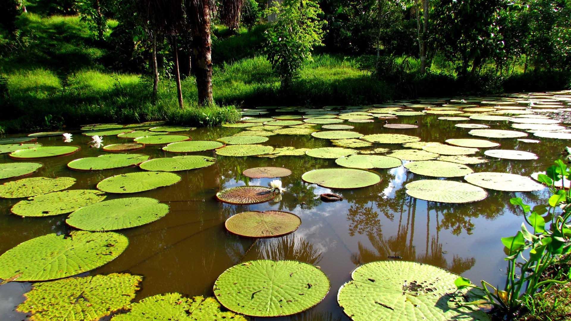 Noruega, Alemania y Reino Unido apoyaran económicamente al país suramericano en su lucha contra la deforestación del este de la Amazonía