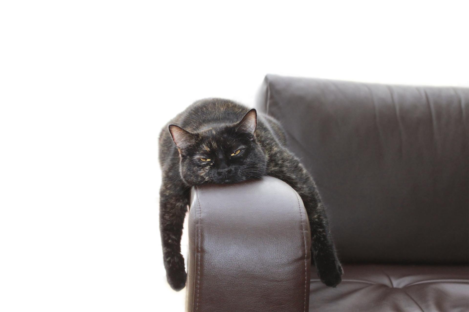Sigue estos consejos para que logres que tu felino se sienta cómodo con su caja de arena y haga sus necesidades feliz