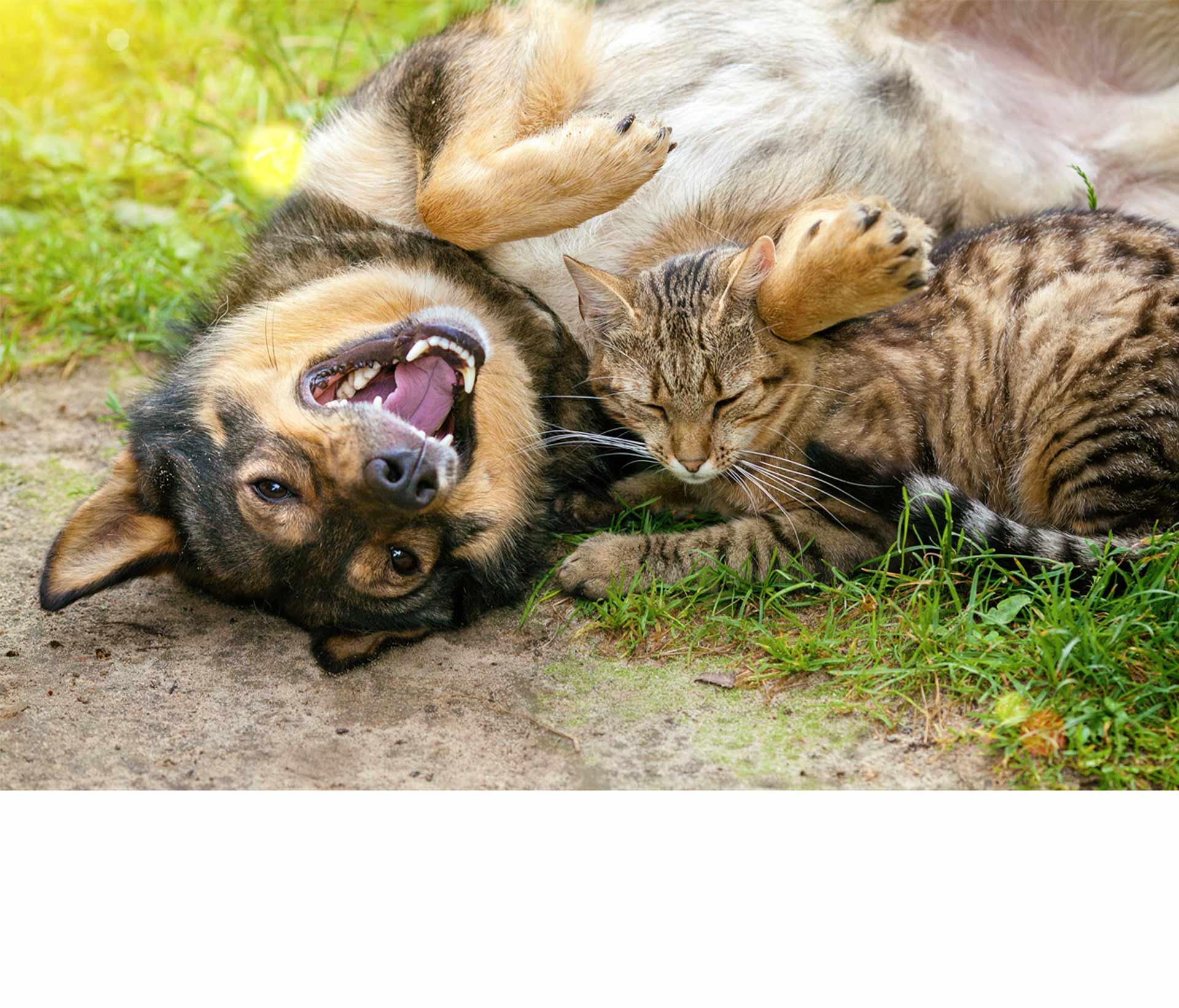 Este miércoles, el Senado aprobó en cuarto y último debate la ley contra el maltrato animal