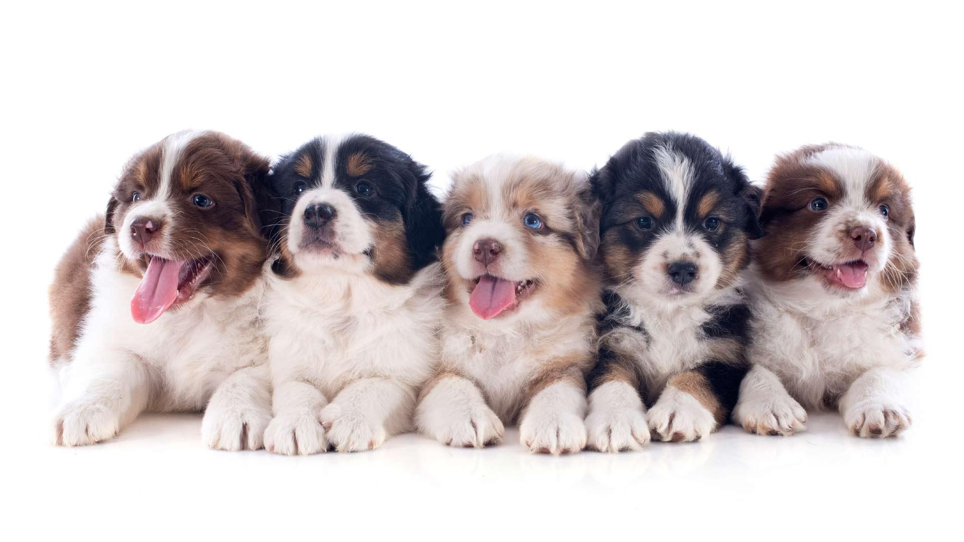 Estos cachorros sí que tienen ritmo. Y por lo visto, les gusta bailar clásicos de la década de los 90