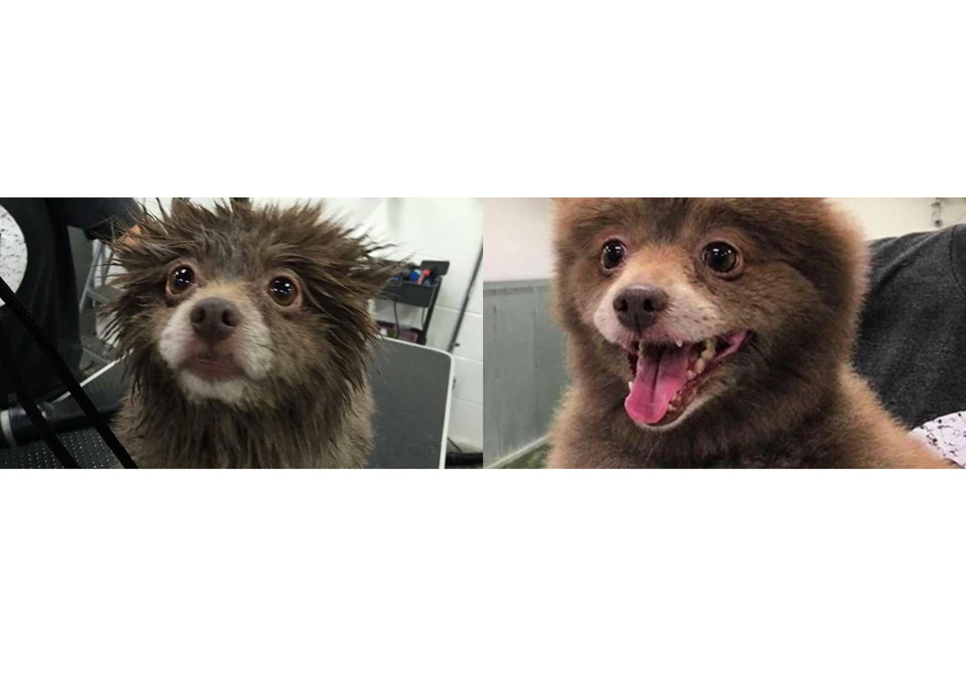 Bounce mantuvo un gran debate en las redes sociales y confundió a muchos internautas que se preguntaban: ¿es un perro o un oso?