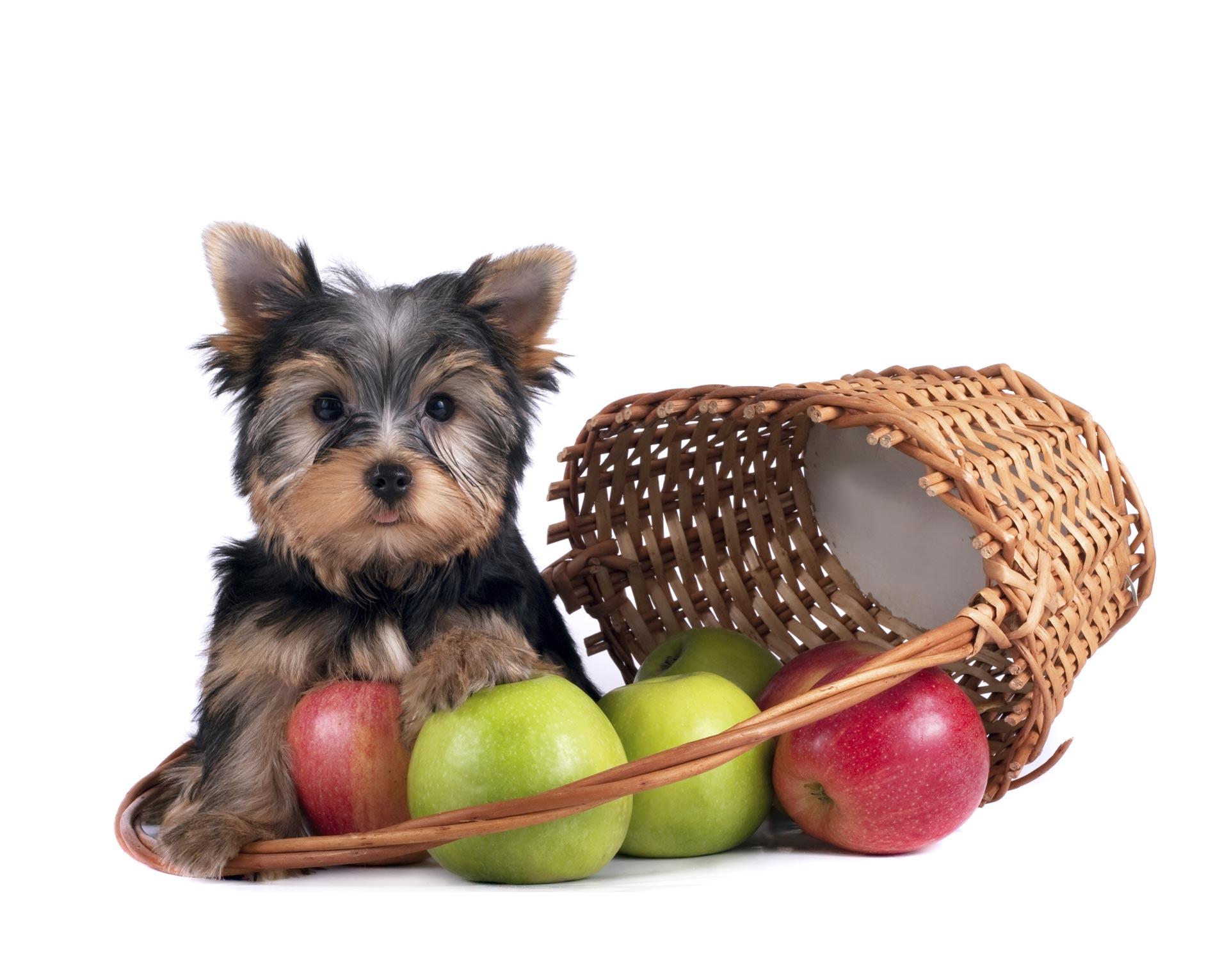 No podemos darle todos los alimentos que consumimos los humanos a los animales, pero aquí te dejamos una lista de los que si pueden comer