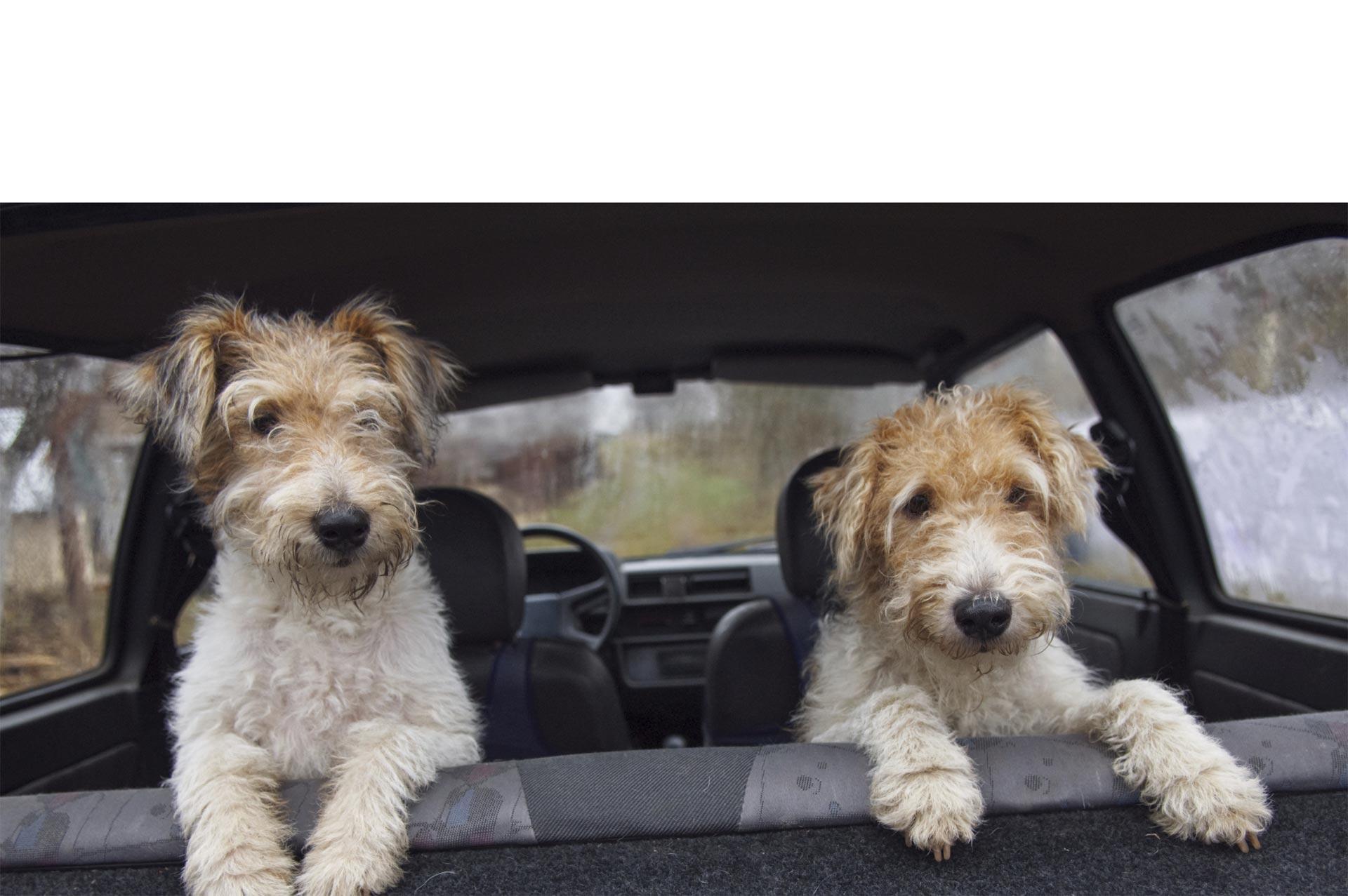Si viajar con tu perro se vuelve complicado porque es incómodo para él, en este artículo te ofrecemos una serie de soluciones para ambos