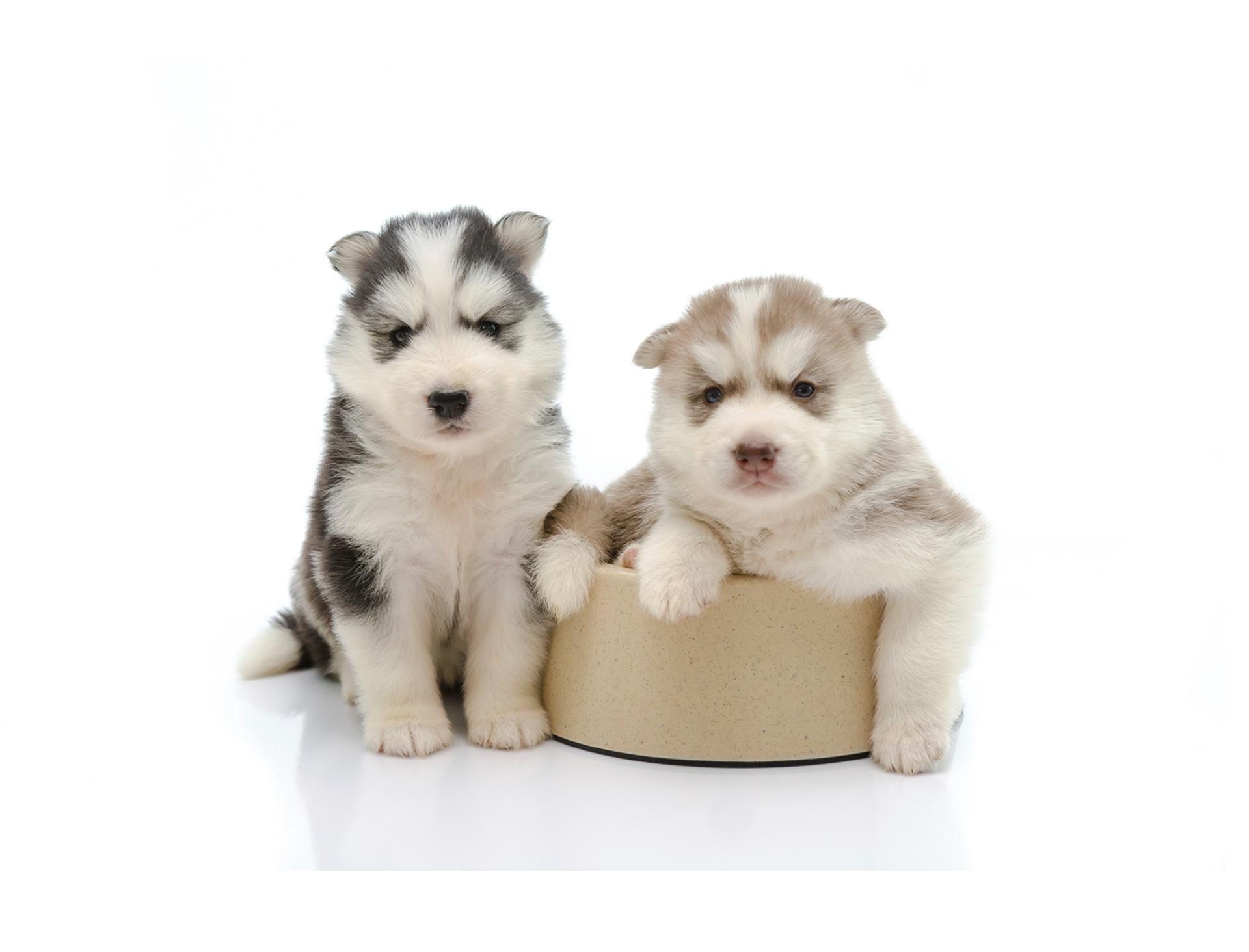 ¿Logrará este lindo cachorrito salir de un bowl en el cual quedó atrapado? Descúbrelo en este gracioso video