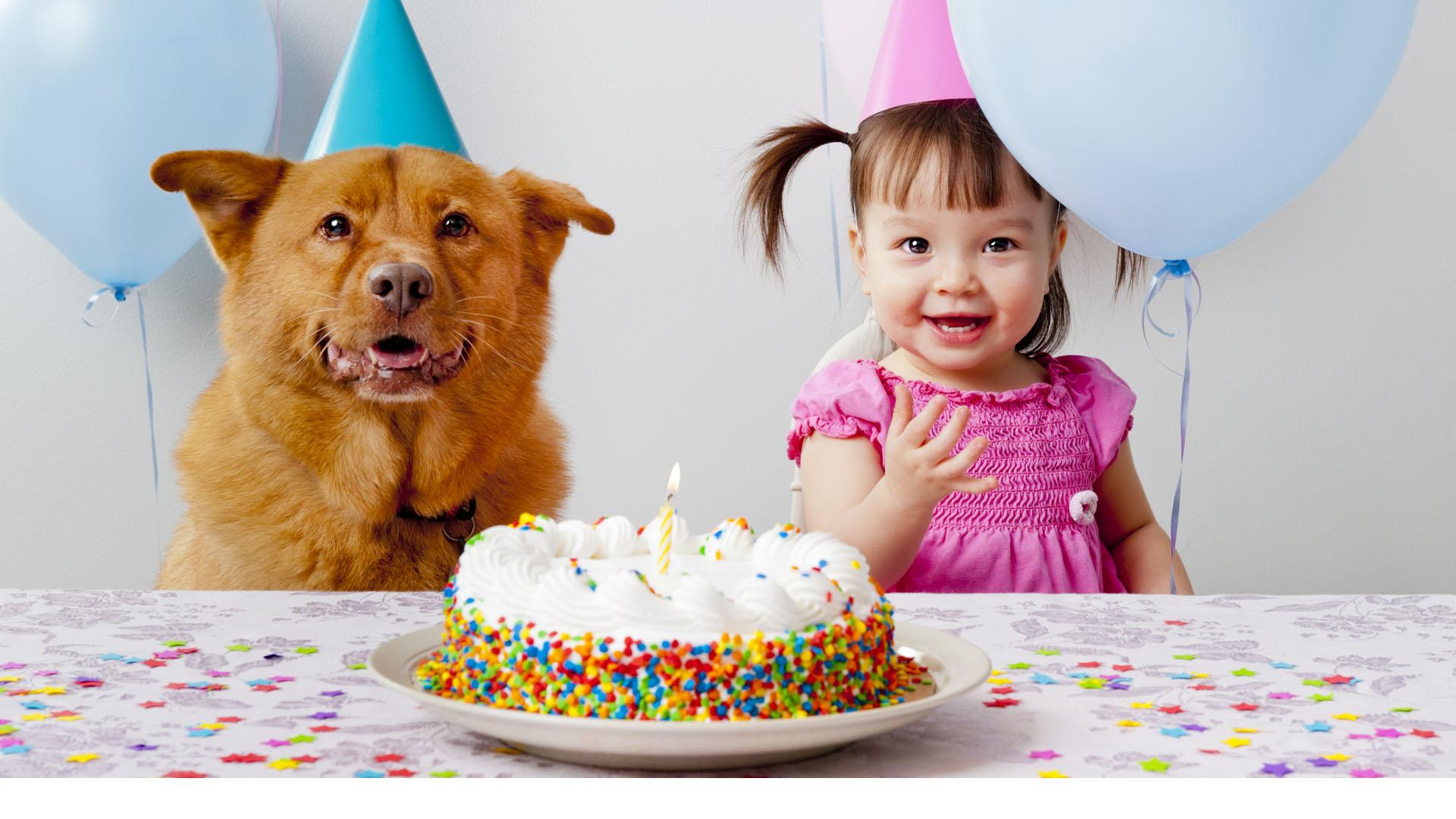 La tendencia de celebrar los cumpleaños o nacimientos de perros y gatos crece cada día más