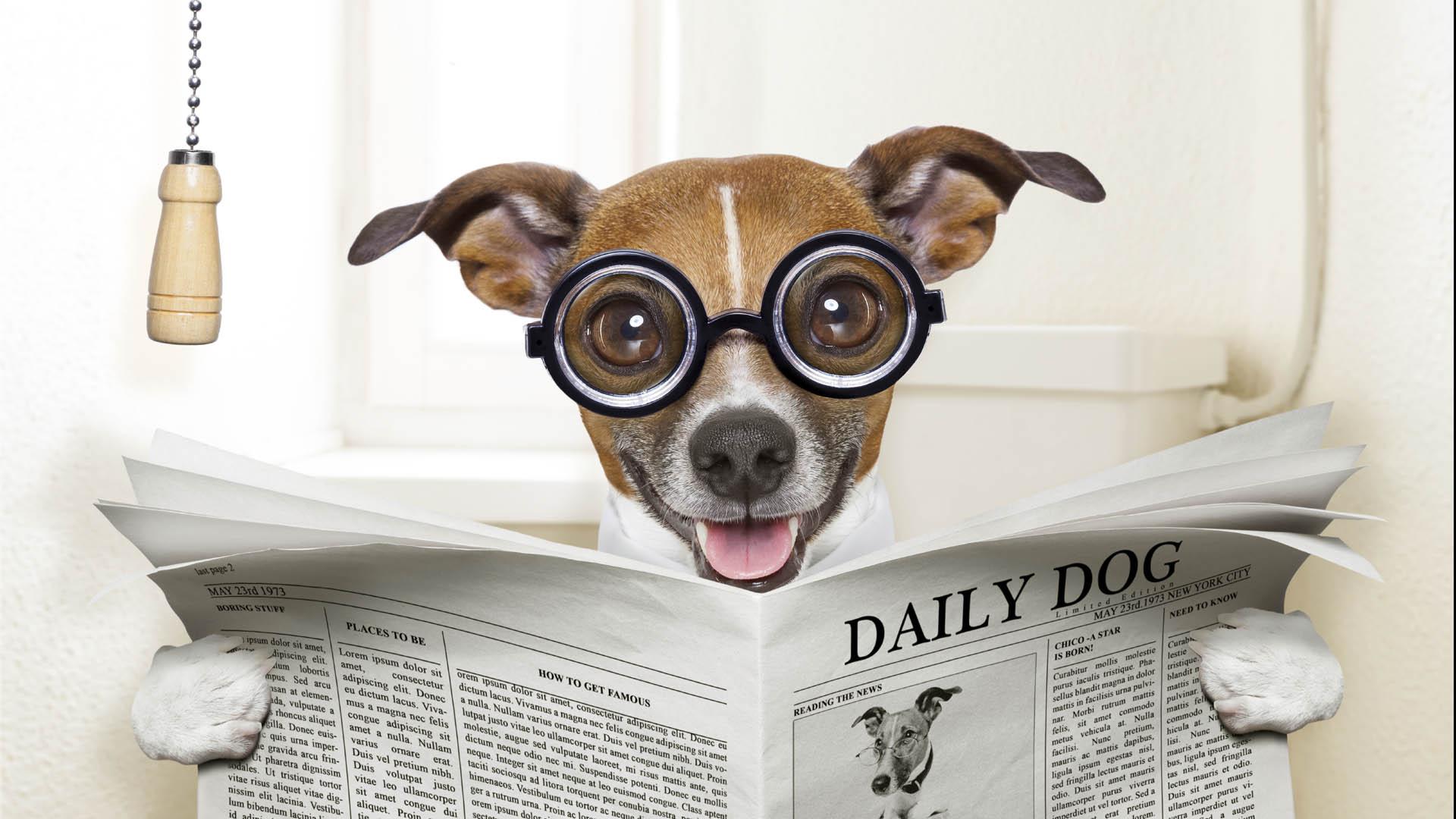 Los entrenamientos y rutinas deben comenzar después de los cuatro meses de vida del cachorro