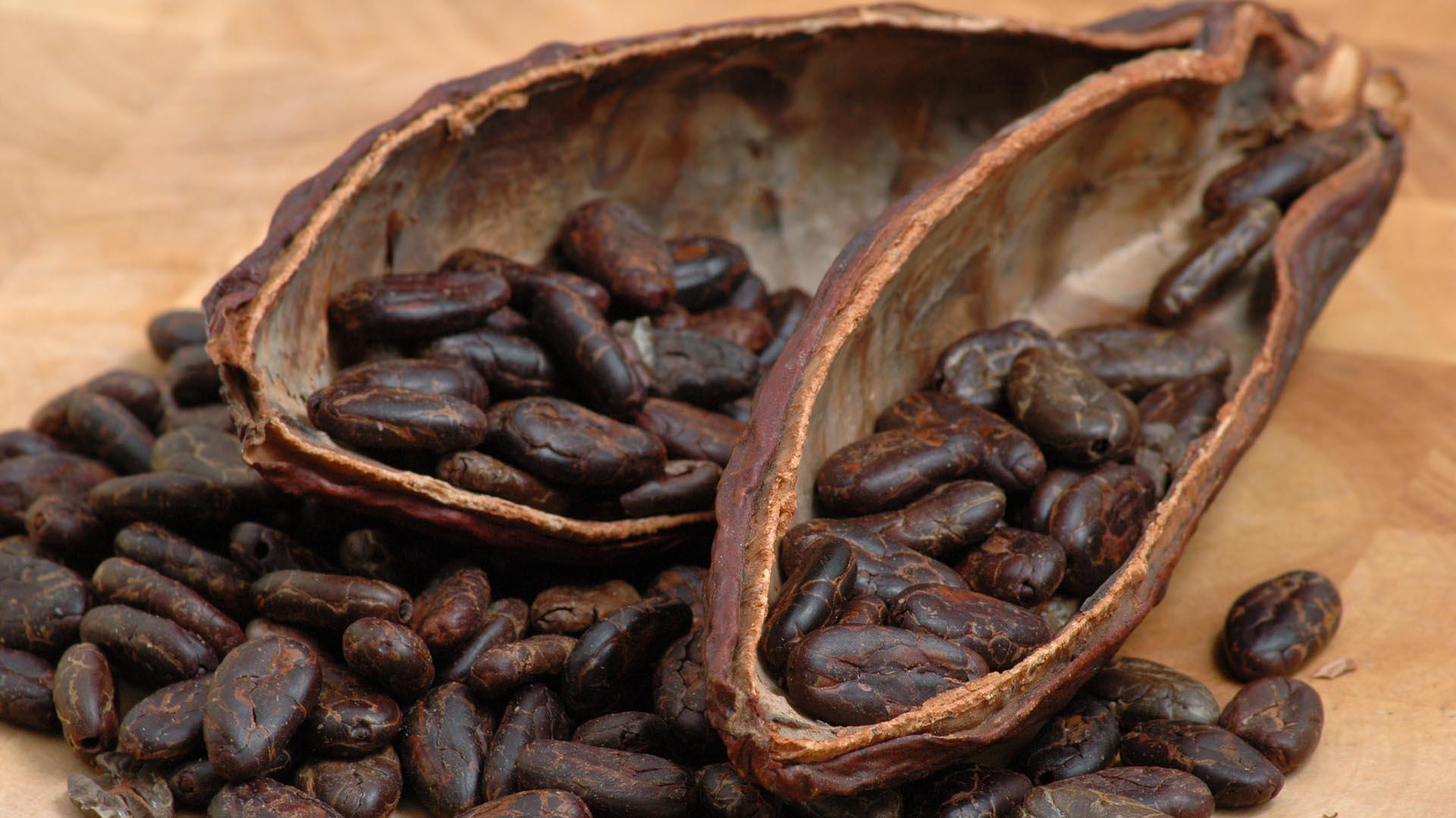 La ICCO cuenta con 49 países miembros, entre ellos 19 naciones productoras que juntas producen más de 95% del cacao mundial