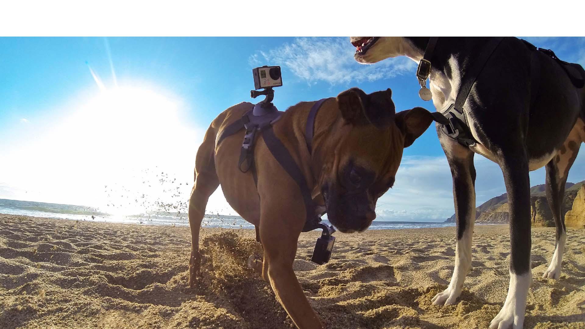 La Firma, participó en una filmación de dos minutos en donde se dramatizan diferentes deportes extremos con mascotas