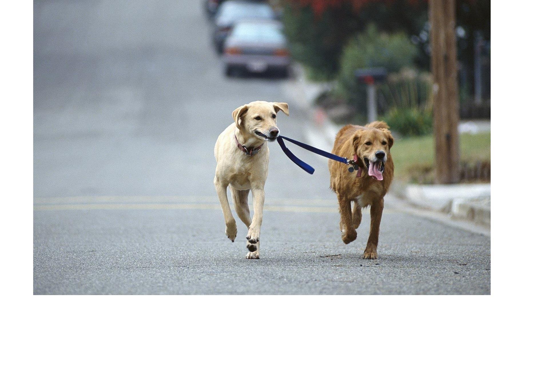 La obesidad también es un problema que aqueja a las mascotas; en ese sentido, la actividad física es importante