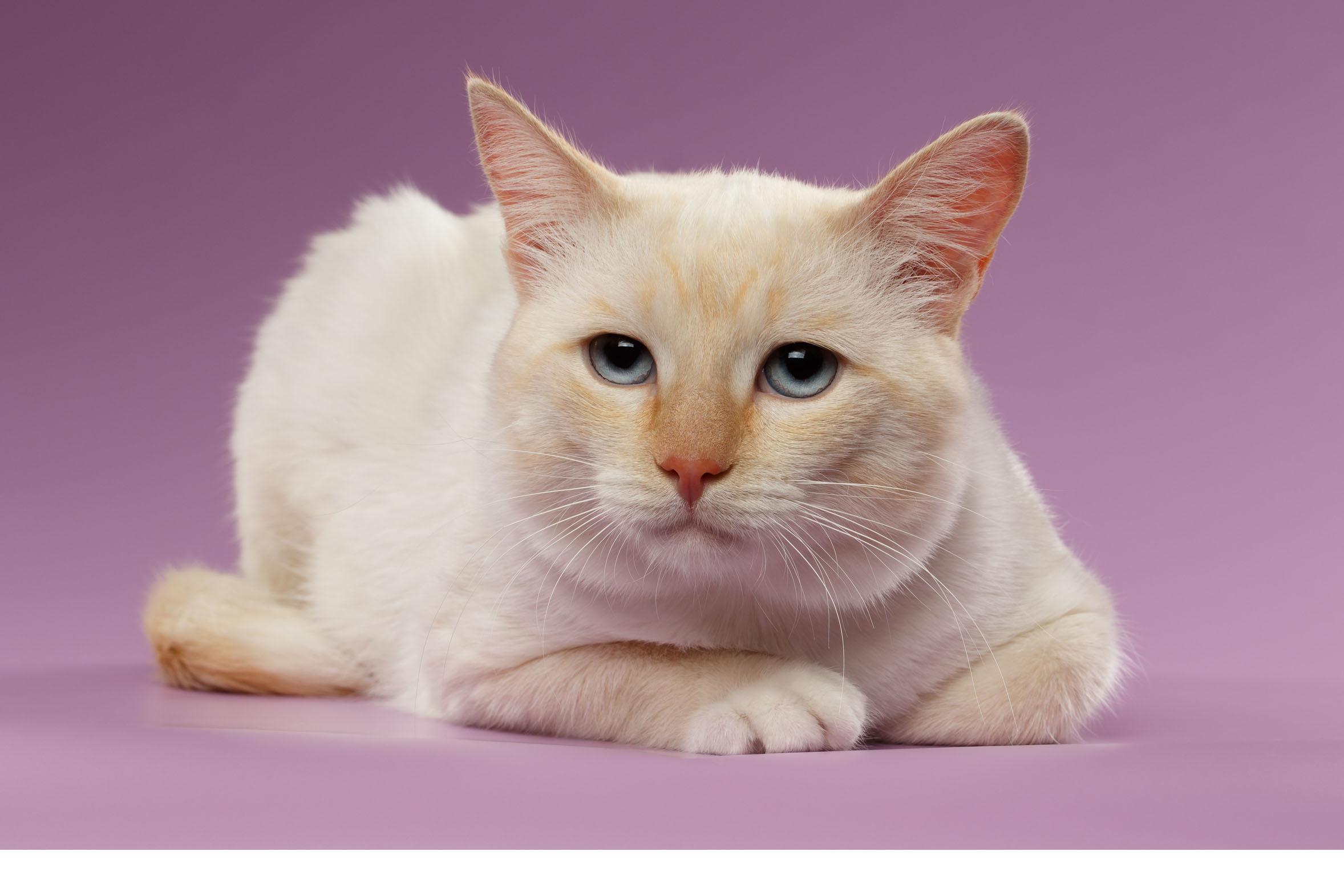 Esta demostrado que las mascotas se parecen a sus dueños en distintos aspectos tales como el carácter y los sentimientos