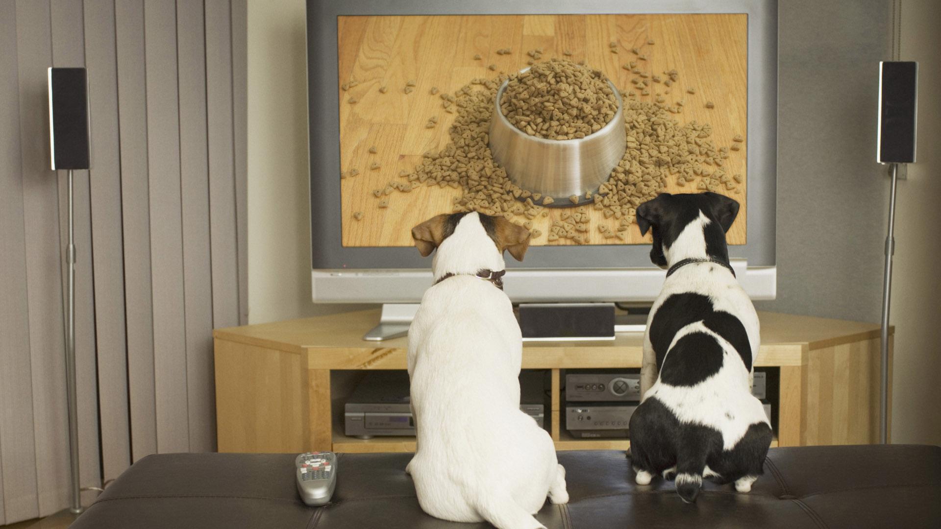 Un estudio realizado por la Universidad de Lancashire Central demostró que a los ganes les gusta pasar tiempo frente a la TV