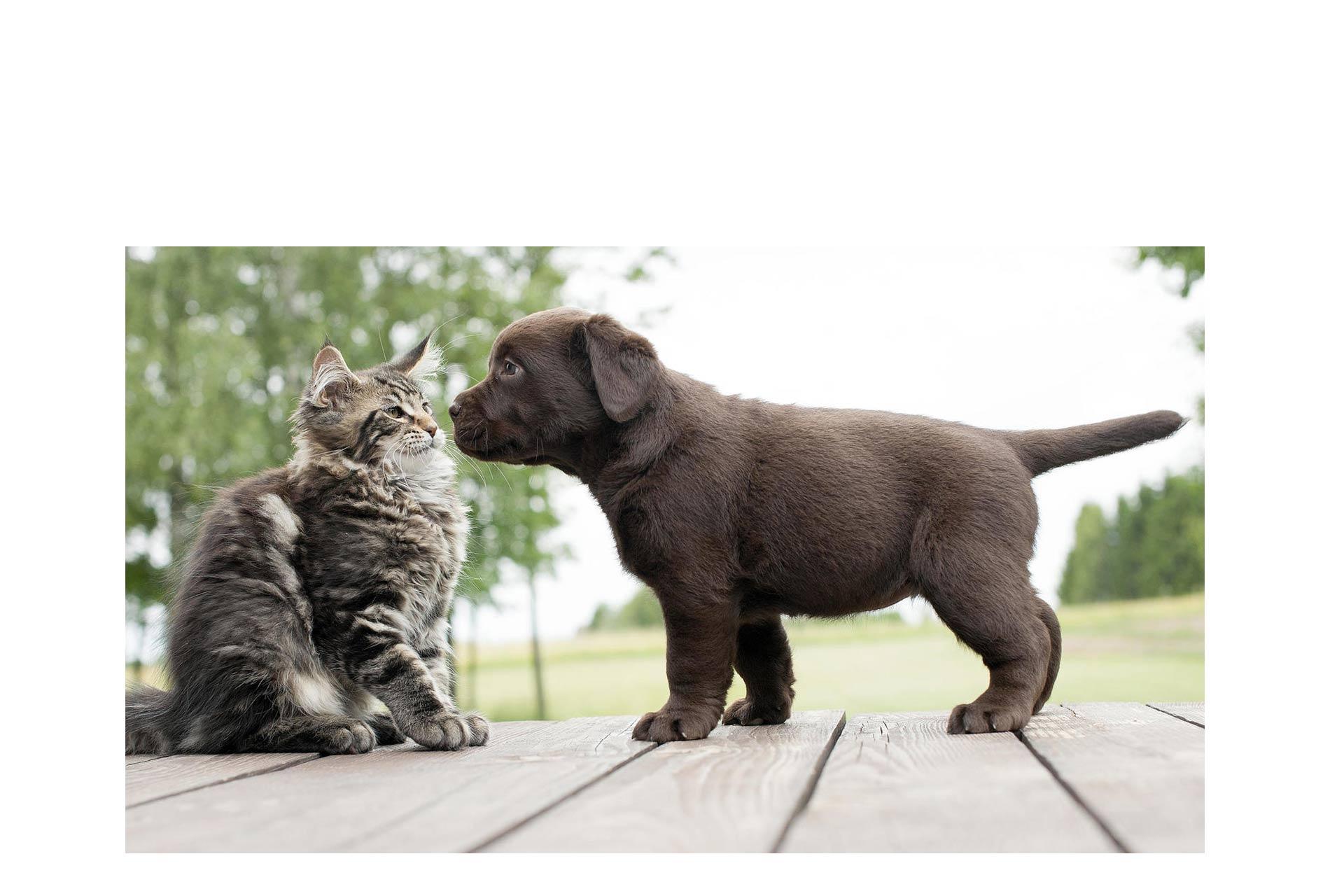 Perros o gatos, ¿cuáles son más fuertes?