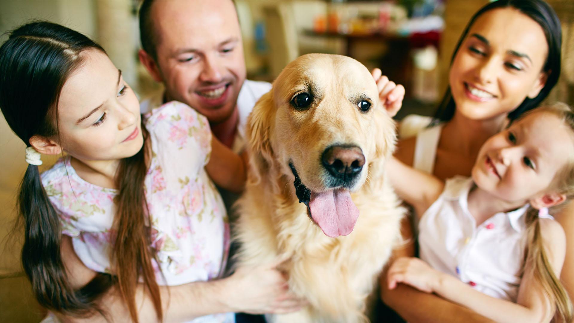Varios estudios afirman que los canes son los mejores compañeros para dar felicidad, comparable a la que genera un beso