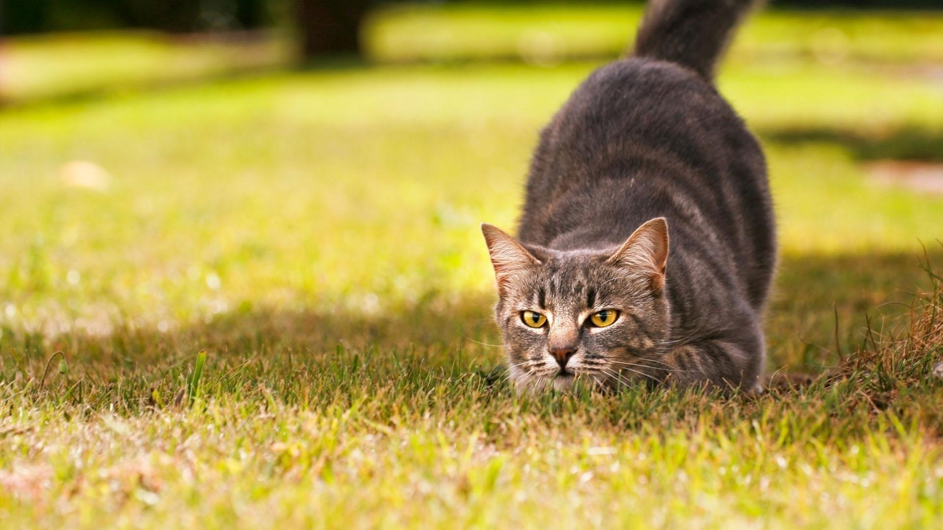 Los felinos, a diferencia de los perros, no suelen depender de las personas para sentirse seguros