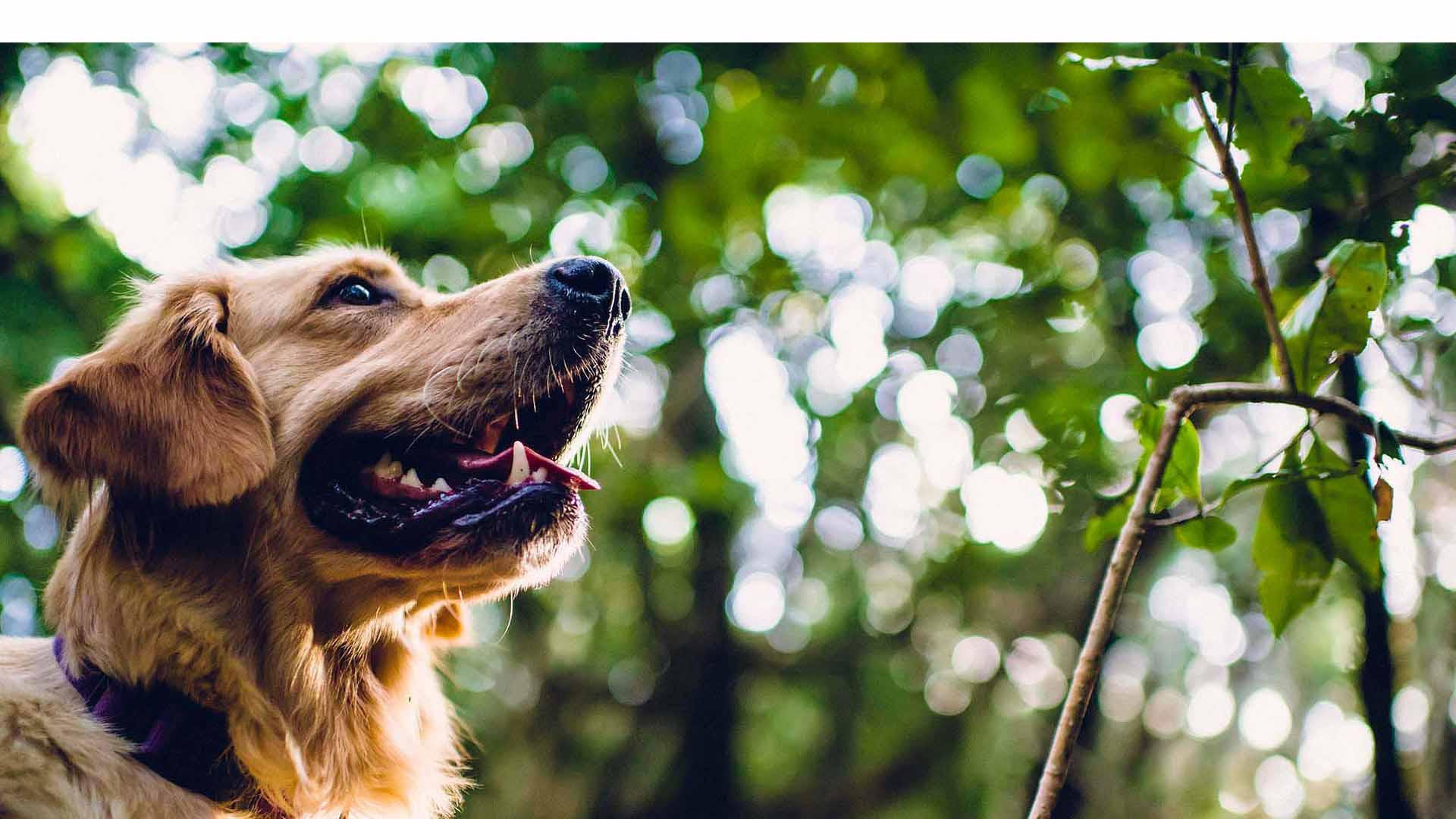 El perro se encontraba atrapado en las ruinas de la casa de donde sus dueños pudieron escapar sin percatarse de lo que sucedía con el can
