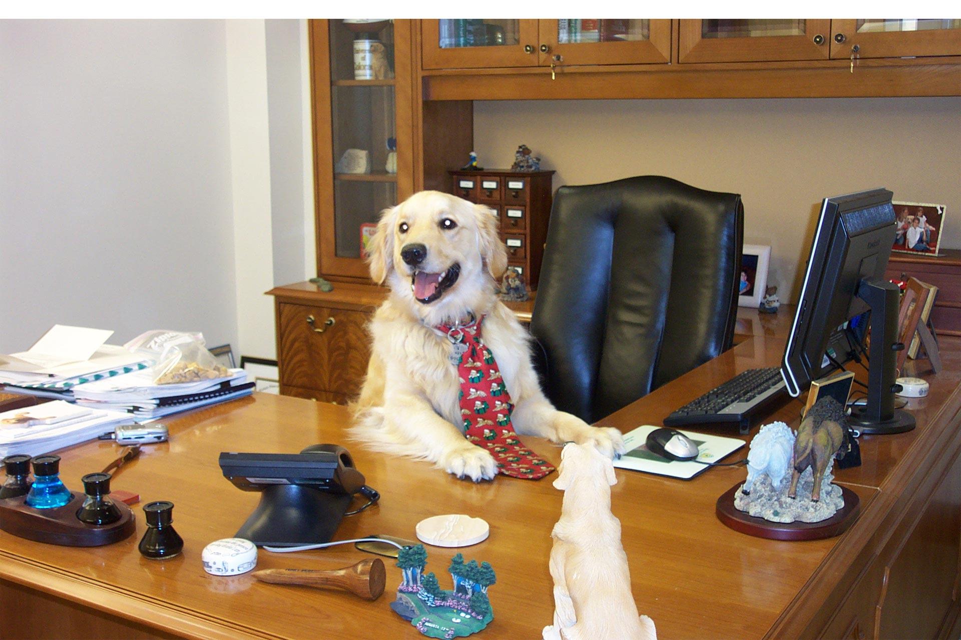 Beneficios de llevar al perro a la oficiana