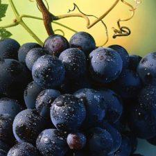 Uvas previenen el cáncer