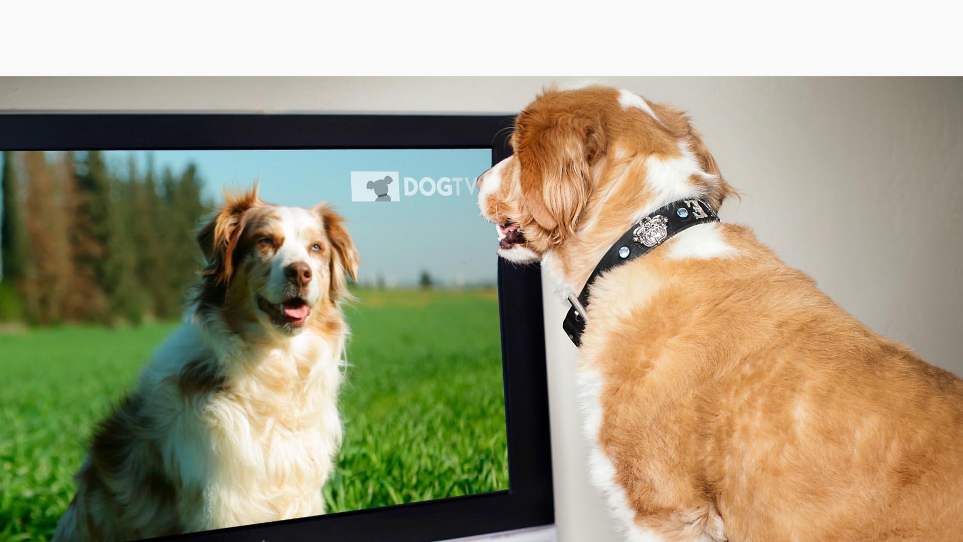 Muchas marcas utilizan a las mascotas en diversos comerciales para presentar sus nuevos productos