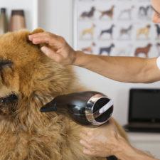 Evita que tu perro le tema a la peluquería