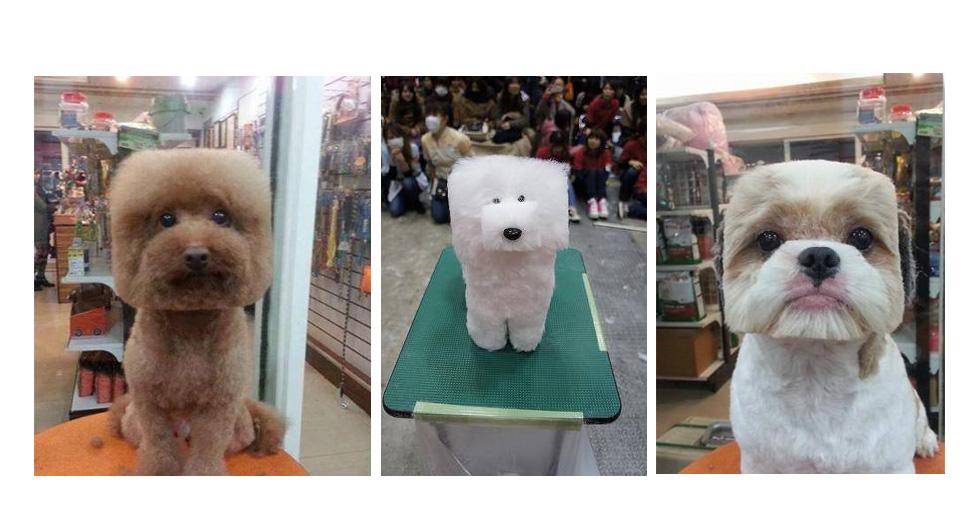 La tendencia en Japón un nuevo corte para perros que consiste en que la cabeza del can se vea totalmente cuadrada