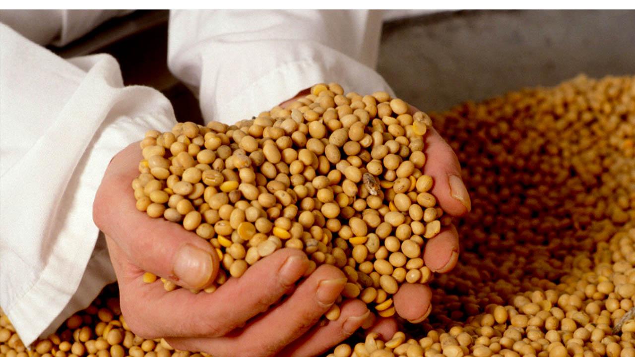 Este producto de la naturaleza brinda nutrientes, vitaminas y minerales que no se encuentran fácilmente
