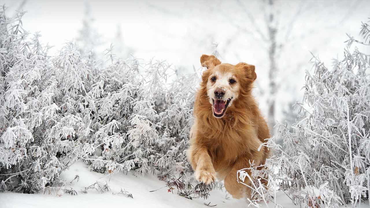 La llegada de la Navidad no solo significa una época para compartir en familia, sino también un tiempo para disfrutar de la caída del manto blanco