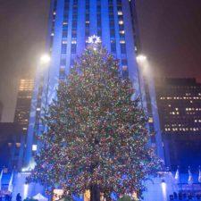 Sorpréndete con los mejores árboles de Navidad