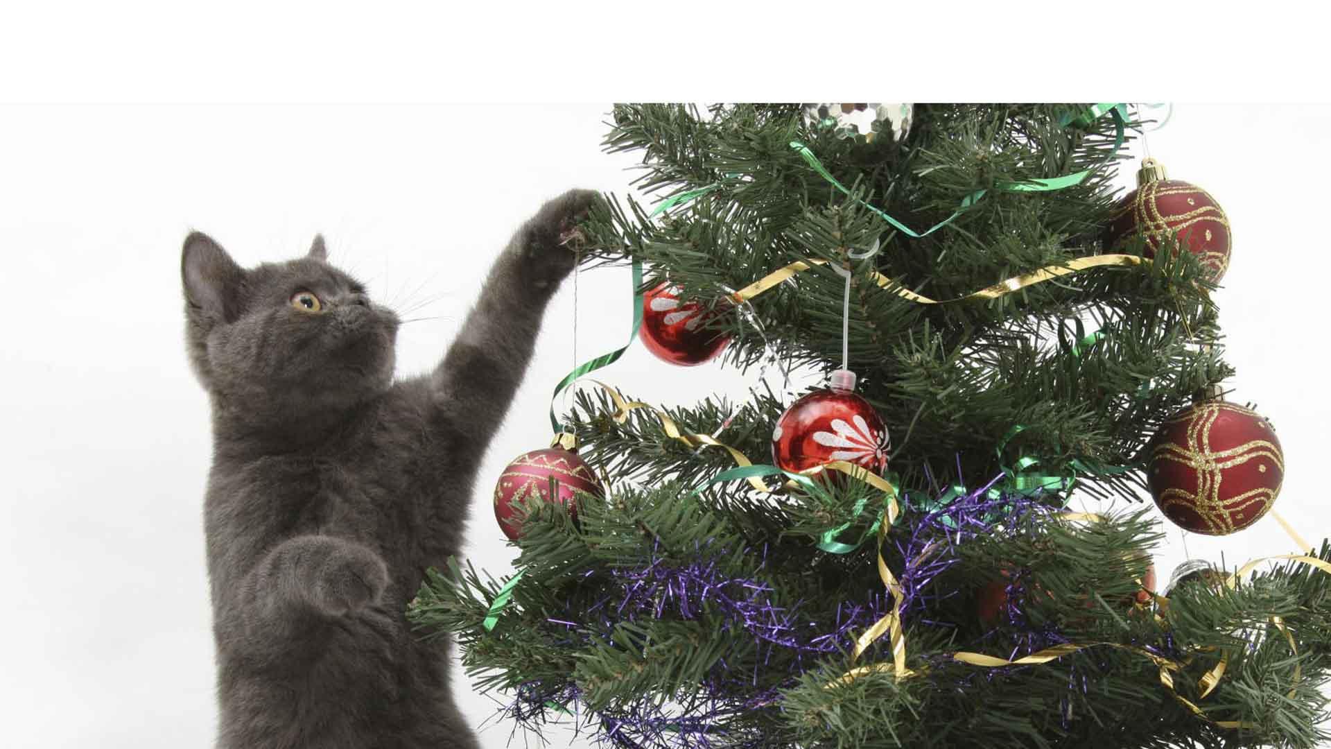 En Navidad los gatos aman jugar con las luces y ornamentos de los pinos