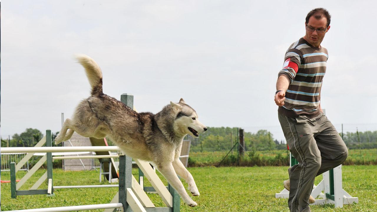 Educar a los perros es fundamental para que el compañero no adquiera comportamientos salvajes o rebeldes