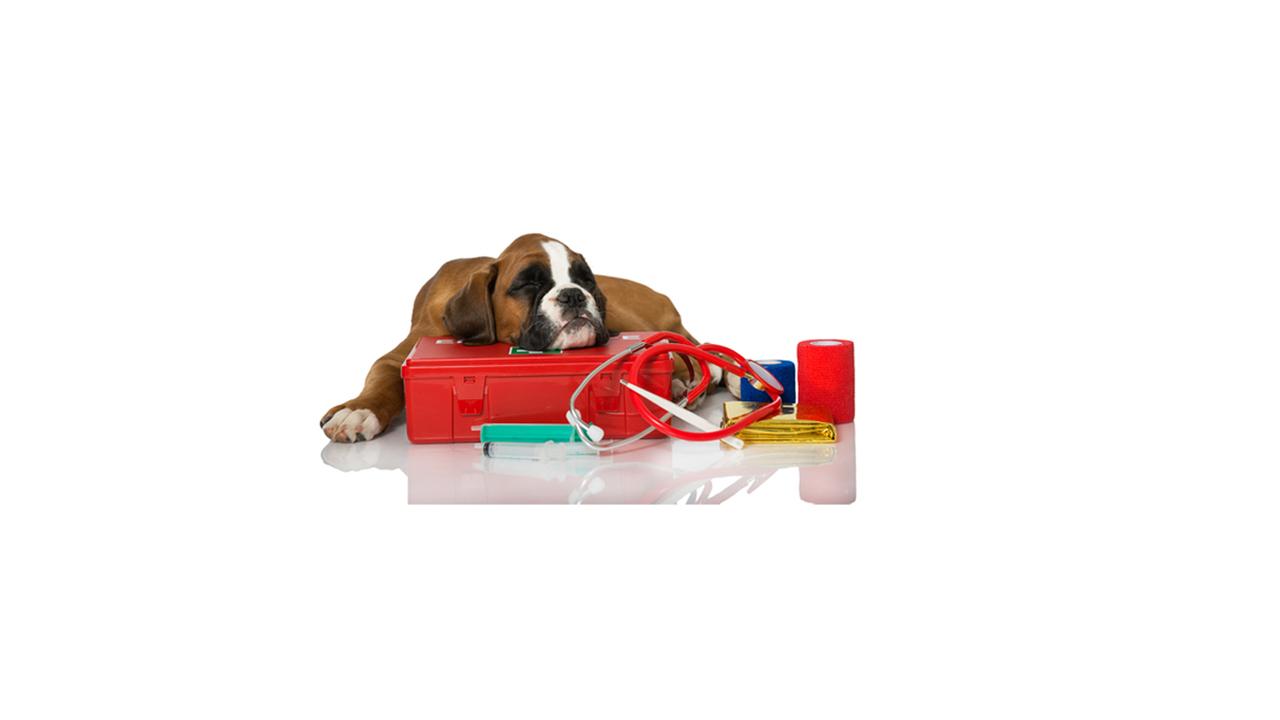 Conocer qué implementos y productos debe contener un botiquín para atender a tu can, es la mejor manera de responder a la hora de una emergencia