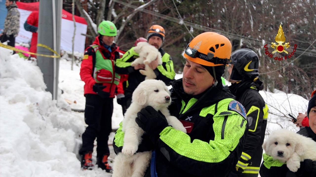 Los rescatistas encontraron a unas mascotas que se encontraban atrapadas en la sala de caldera
