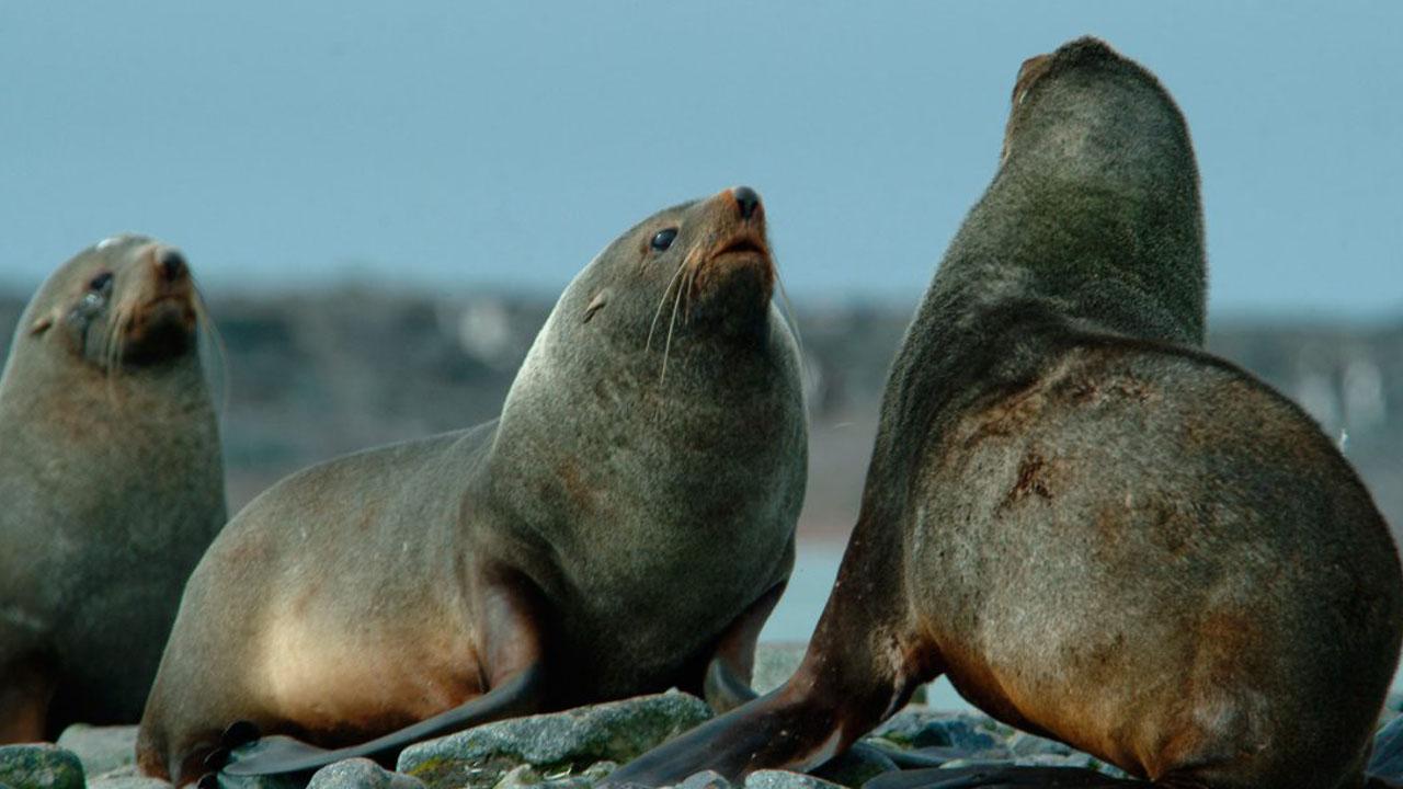 El gobierno chileno quiere que los animales no se extingan