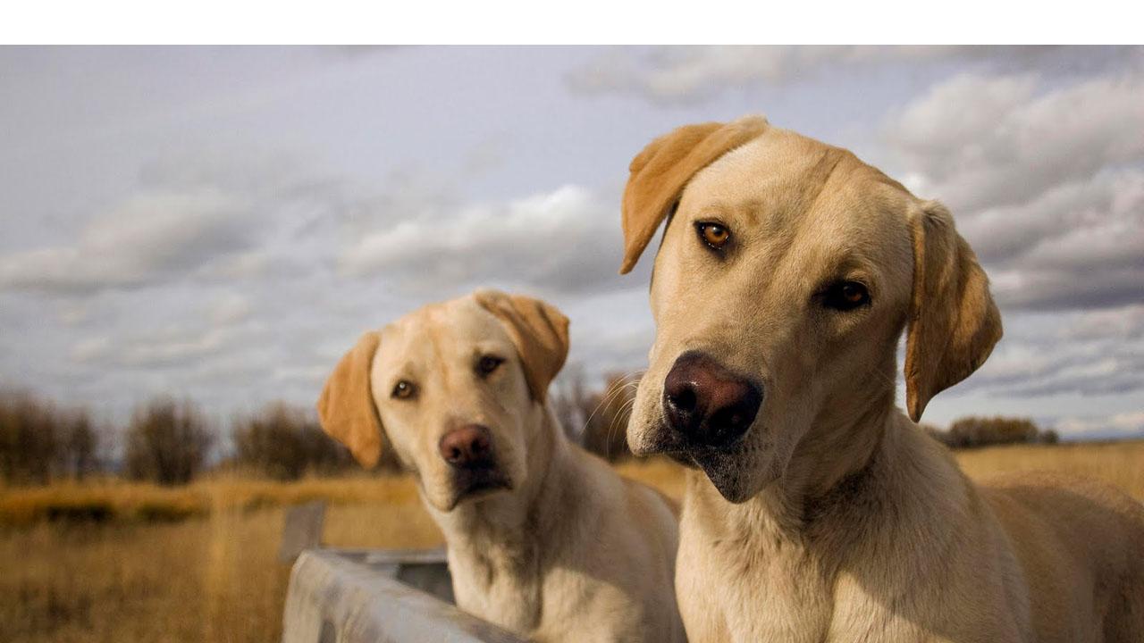 El Observatorio Justicia y Defensa Animal y Ciudadanos piden la modificación del Código Civil con más de 200.000 mil firmas