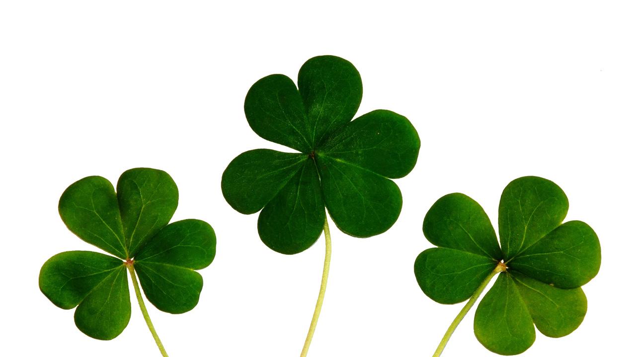 Esta planta, símbolo del Día de San Patricio, tiene muchos beneficios para el cuerpo en general gracias al contenido de fibras y vitaminas