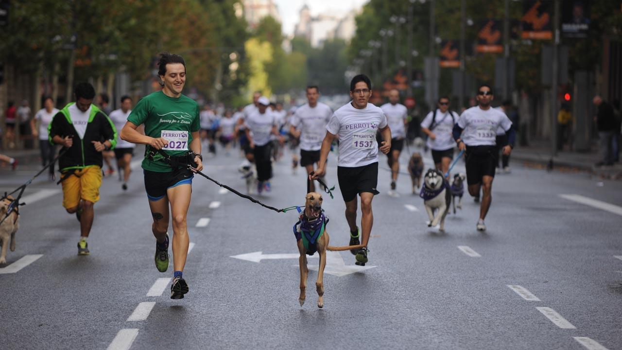 Será la séptima vez que Purina Dog Chow realice este evento cuya finalidad es unir a los perros y sus dueños para beneficiar a instituciones de rescate y cuidado animal