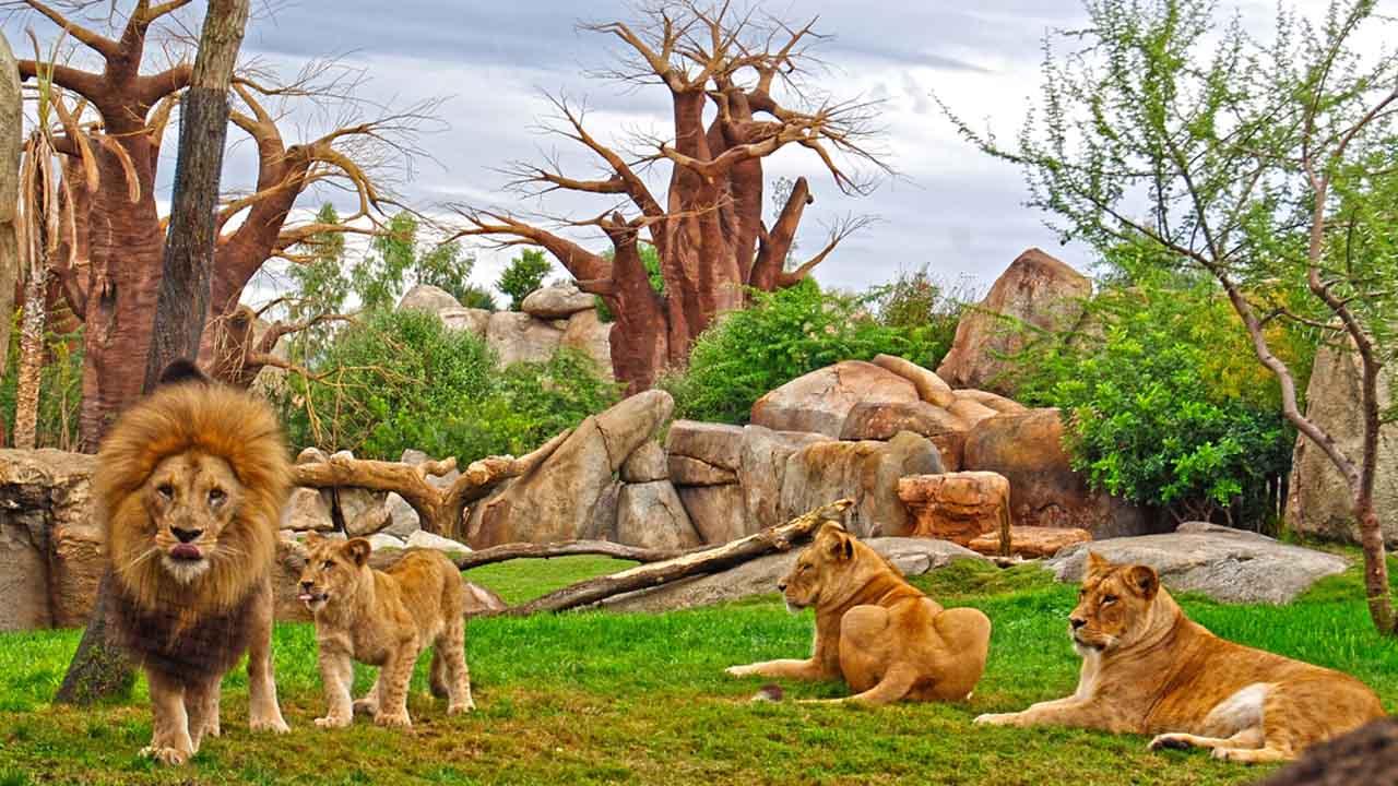 En la ciudad de Valencia hay un espacio dedicado a la recreación y el disfrute de los animales haciendo que los visitantes vivan una experiencia única e inigualable