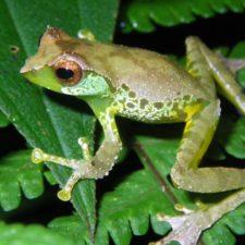 Cambio climático impulsa especies híbridas
