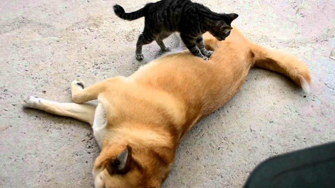 Un spa usa gatos como herramientas