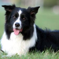 Perro ayuda a superar la muerte de seres queridos