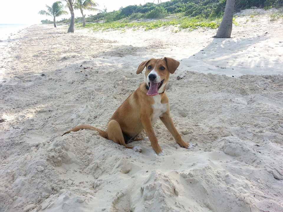 Una isla de las Turcas y Caicos reúne a casi 100 perros que son rescatados, cuidados apropiadamente por una organización sin fines de lucro