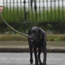 Perros van a votar en Reino Unido